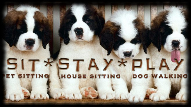 Sit Stay Play Dog Walking and Pet Sitting